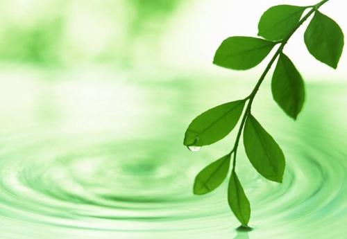 green-spring-leaf-1998511-l