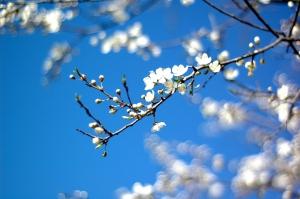 spring-1441896-m