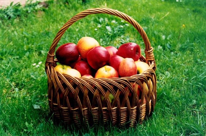 Æbler, æbler og endnu flere æbler