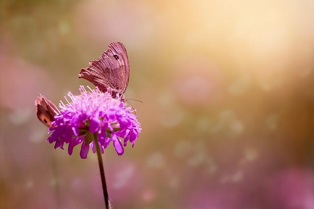 butterflies-1655657_640